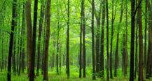 Ein Wald für Bach